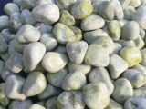 Natural Pebble / río Pebble / Jardín Pebble (YY-SP007)