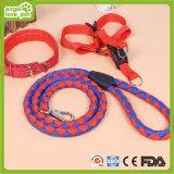 애완견 Leashes&Collar&Harness (HN-CL638)를 위한 고품질 밝은 색깔