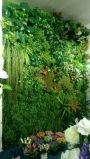 구 Mx 녹색 Wall009 녹색 벽의 고품질 인공적인 플랜트
