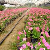 Cinta de la irrigación por goteo de la agricultura del ahorro del agua para la irrigación de la granja