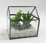 Usines mises en pot de Terrarium carré artificiel de bâti succulentes