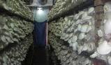 Sitio/refrigerador del refrigerador de la conservación en cámara frigorífica de la cámara fría de la seta