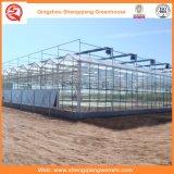 Agriculture/Chambre verte en verre Multi-Envergure de jardin pour le fruit/fleur