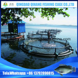 HDPE Fish Net Cage、Aquaculture Net Cage Company