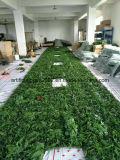 Mur s'élevant artificiel d'usines en plastique de prix usine d'exportation