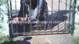 Гальванизированная сетка мелкоячеистой сетки/шестиугольное плетение провода с низкоуглеродистой сталью