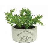 Mini potenciômetro artificial do cimento da planta verde