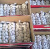 中国の正常で白いニンニク(4.5cm、5.0cm、5.5cm、5.5cm、6.0cm)