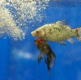 De drijvende Korrel die van de Machine van het Voer van Vissen de Prijs van de Machine maken