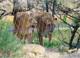 Safe Zoo / Animal Fence com malha de aço inoxidável