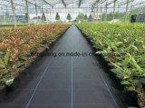 Barrière en plastique de Weed de tube de boyau de jardin de Weifang