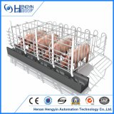 Schwein-züchtend Geräten-Sau-Schwangerschaft-Rahmen für Verkauf