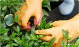 Guanti liberi del nitrile della piccola di MOQ buona polvere a gettare di prezzi per la famiglia
