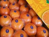 Exportación (GLOBALGAP HACCP) Fresh Pomelo