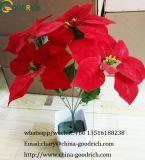 De Poinsettia van de Bloem van Kerstmis
