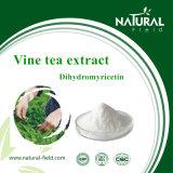 Pó de 50% Dihydromyricetin pelo extrato da planta do extrato do chá da videira de HPLC