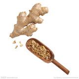 Порошок выдержки имбиря/выдержка корня имбиря/5% Gingerol