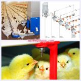 Equipment automático em Poultry Farming House para Broiler Chicken