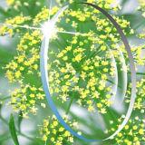 Youli 1.60 Mr8 Hmc EMI 녹색 코팅 광학적인 수지 렌즈