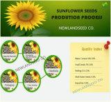 2016 nieuwe Zaden van de Zonnebloem van het Gewas 5009 met Uitstekende kwaliteit