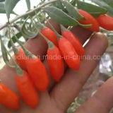 Lbp van de mispel Natuurvoeding Rode Droge Goji Lycium