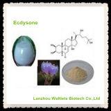 Alto polvo natural de Sophocarpidine de la extracción de Qualtiy Matrine