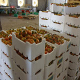 Linha de produção de empacotamento da caixa da fruta da máquina do EPS