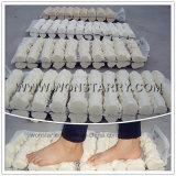 CFC het Vrije Schuim van het Dichtingsproduct Pu van het Polyurethaan van de Bouw