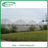 Vent fisso Flower Greenhouse per il Kenia