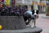 防水ペット製品犬の衣服