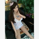 Busty東洋のアジア日本の女の子の固体性の人形(165cm)