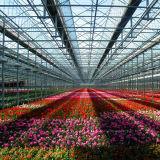 De commerciële Serre van het Glas van de multi-Spanwijdte voor Bloemen