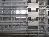 4 rangées de bâti de 128 oiseaux H de système complètement automatique de cage de couche de matériel de volaille