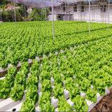 농업 온실을%s 대중적인 수경법 온실