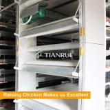 Тип автоматическая цыплятина Tianrui горячий продавая h слоя батареи арретирует