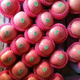 Surtidor de oro para el chino rojo fresco de manzana Fuji / Qinguan de Apple