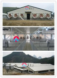 ISO Certificated Prefabricated Steel Pig House (CH-51)