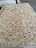 Classe OSB da mobília do mercado 1220*2440mm do Facttory-Russo OSB em 9mm 12mm 15mm