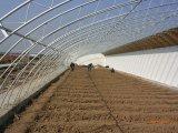 Conservatoire solaire de serre chaude/cultivateur cultivé en serre/grand