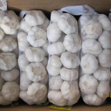 Chino normal Ajo blanco (4,5 cm, 5,0 cm, 5,5 cm, 5,5 cm, 6,0 cm)