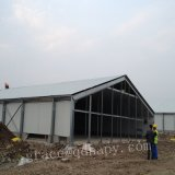 Steel chiaro Broiler Poultry Farm e Broiler Poultry Equipment