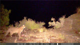 Videosorveglianza di HD 12MP Invisible Black IR Wildlife