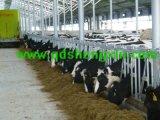 Collier de force ch-001 de bétail de ferme de vache
