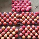 Il nuovo raccolto con buona qualità Qinguan fresco Apple