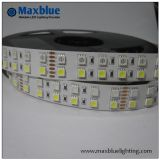 Indicatore luminoso di striscia di DC12V/24V SMD3528 LED