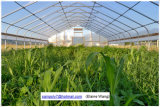 きのこのためのプラスチックフィルムのネットの温室の温室