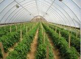 HDPE van het anti-Insect van de landbouw Netto Nieuwe