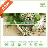 Acido clorogenico di dimagramento eccellente di caffè del prodotto dell'estratto verde del chicco
