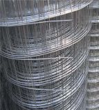 Galvanized Rabbit Cage Wire Galvanized Welded Wire Mesh