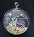 Vaso de vidro de suspensão do projeto da forma para a planta